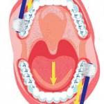 今日はいい歯の日。歯を磨くだけではない口腔ケア