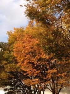 ホテル阪急エキスポパークの駐車場に植わる木はすっかり枯れ葉