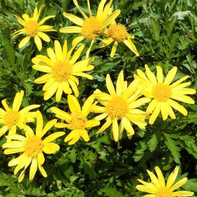 黄色い花が咲いています