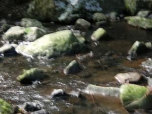 浅い川にせせらぎが流れています。