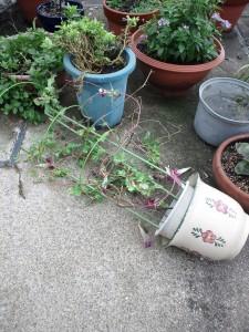なぎ倒された鉢植え