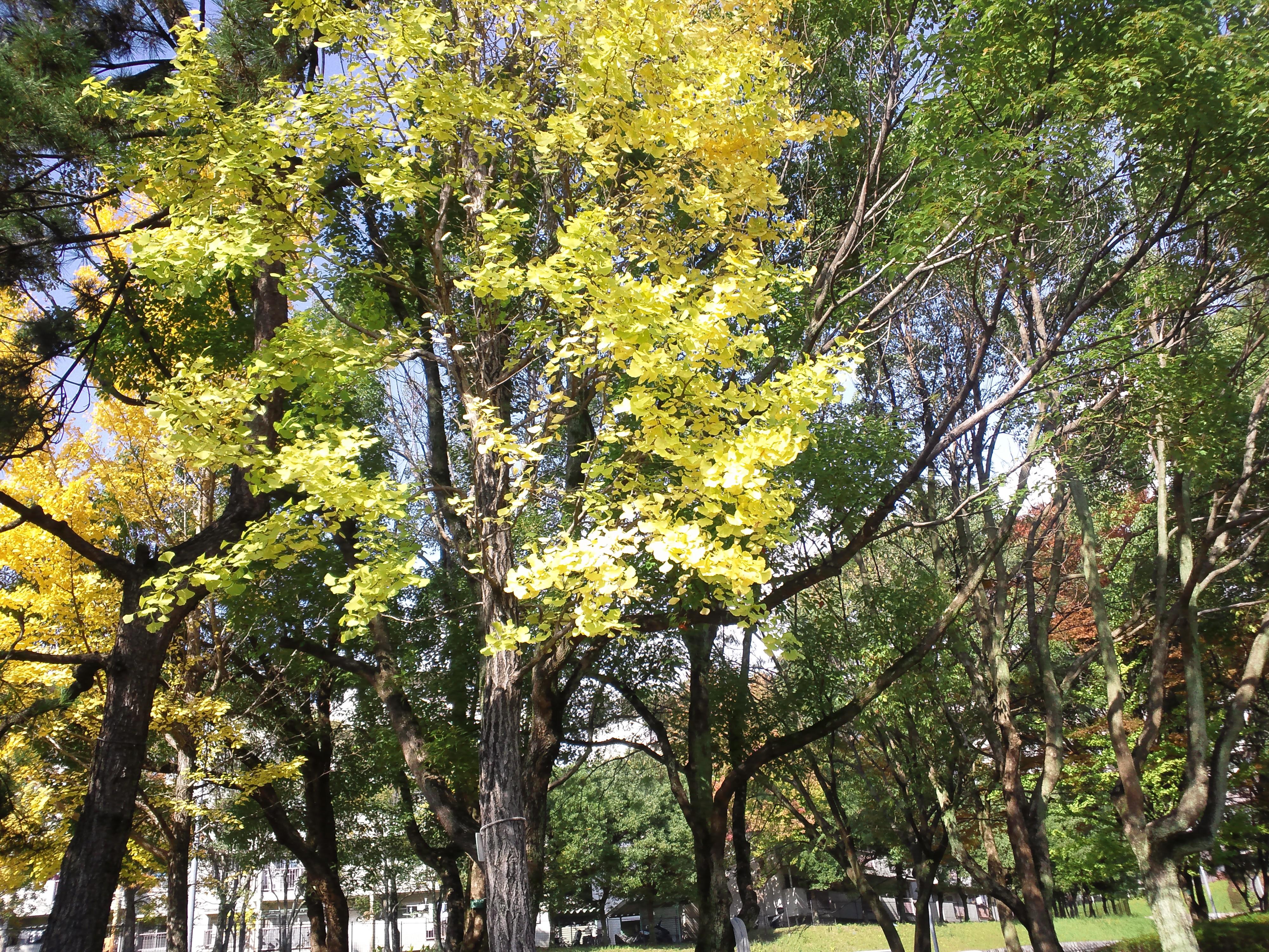 ずいぶんと秋めいてきました
