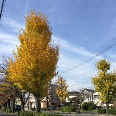 黄色く色づく木々
