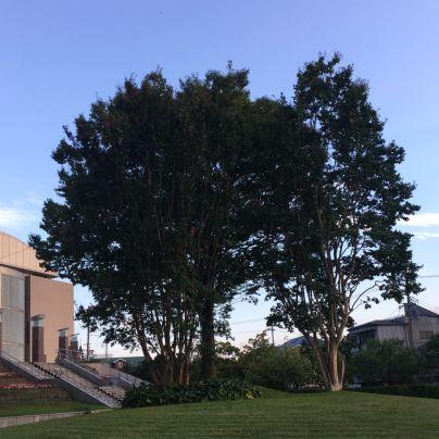 みのおライフプラザに立つ木