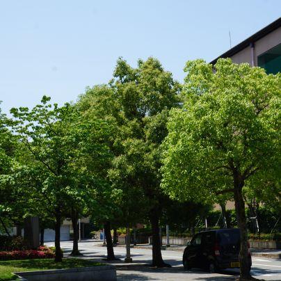 緑の葉が茂った木が数本道すがらに並んでいます。