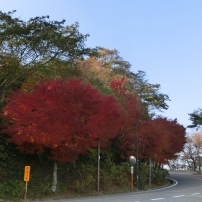 六甲も紅葉が見頃でした