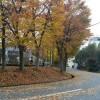 箕面市は紅葉まっさかりです。