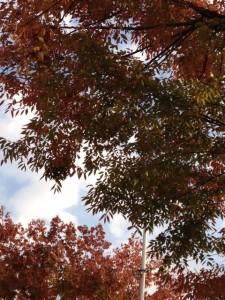 ホテル阪急エキスポパークの植木を見上げて撮影しています