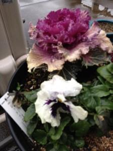 赤村sきの花が雨に濡れています。