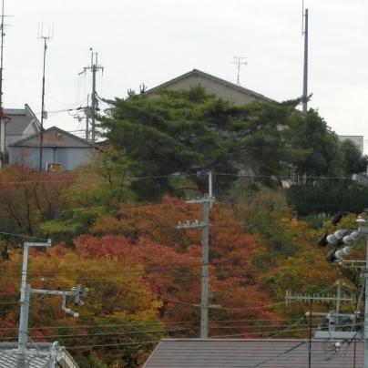 秋色の待兼山
