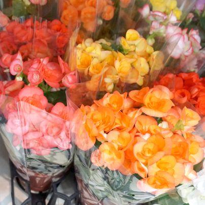 夏の大感謝祭2016で記念のお花