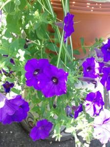 わが家の庭に咲く花