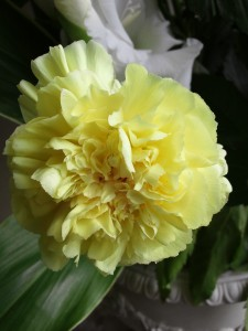 黄色い菊の供花です