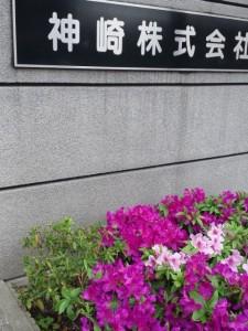 神崎株式会社・快適空間スクリオの正面玄関の植え込みに濃い赤紫色のつつじとピンクのつつじが咲いています。植え込みの上方には神崎株式会社の看板が見えます。