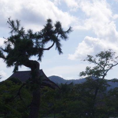 篠山城跡のあたり