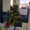 クリスマスツリー登場★