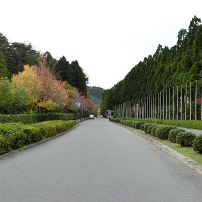 まっすぐな直線の左側には色づく木々が植わっています。
