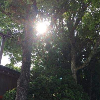木々の隙間から暮れて行く太陽が見え隠れします