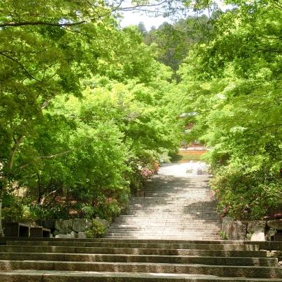 石造りの長い階段は左右から新緑をまとった木々が被さっるように迫っています。