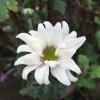 津久井やまゆり園の惨劇で被害に遭った方々へ哀悼の意を表します