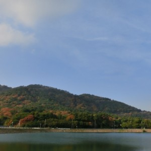 六甲山は奥池の紅葉