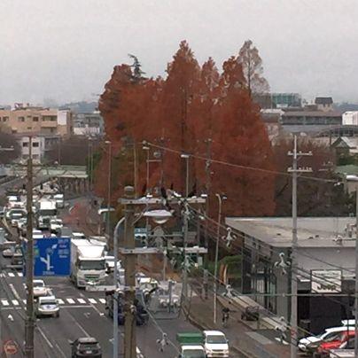 国道171号線ではジープのディーラーさん。その向こうにで大きな樹木が立っています。紅葉の時期も過ぎ散りゆくところです