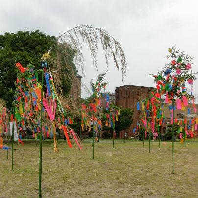 芝生の上に数十本の七夕飾りが立っています。