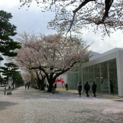 広い歩道に面した一面ガラス張りの十和田市現代美術館。その歩道に桜が植わり、桜の花びらが一面に。